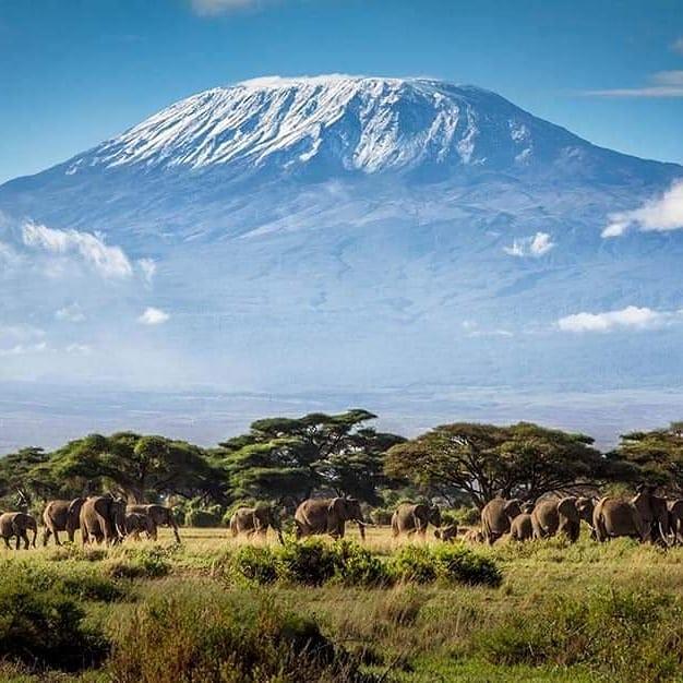 фото горы Килиманджаро со слонами