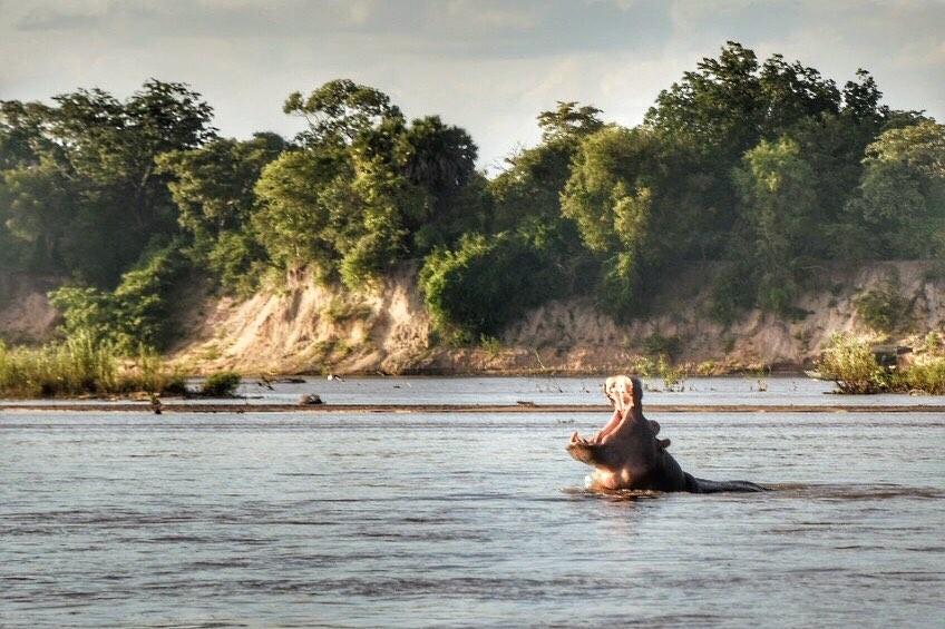 фото парка Селус с рекой и бегемотом